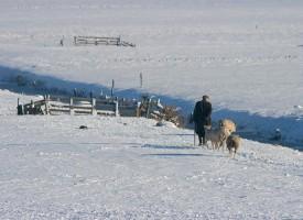 Gelderswoude, winter 2010