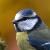 Gewone vogels