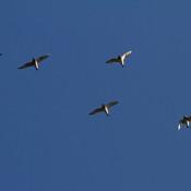 Vogeltrek: wil ik ook. Vrij als een vogel.