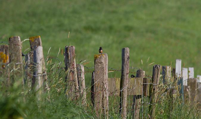 Zwaluw op hek