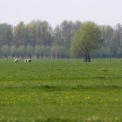 Oostbroekpolder
