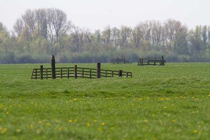 gelderswoudse polder