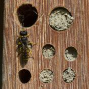 Insectenhotel: niet een hele grote roze wolk
